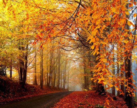 اردوی پاییزی